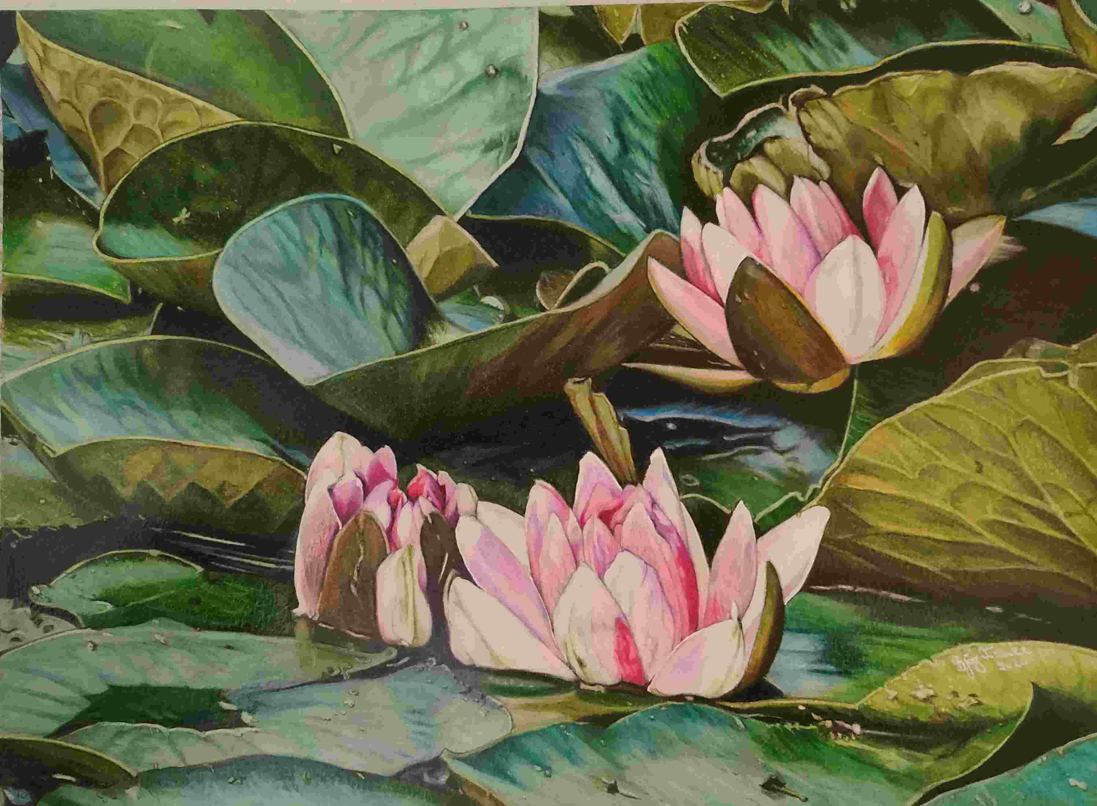 I am one of ,''the weekly wonders'' with »In the lily pond« week 21.01 2020 - 25.01.2020